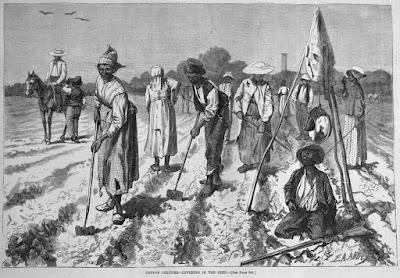 Σκλάβοι εργάζονται στις φυτείες βαμβακιού - Cotton slaves working