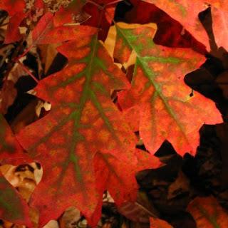 Jesienny Tag Książkowy