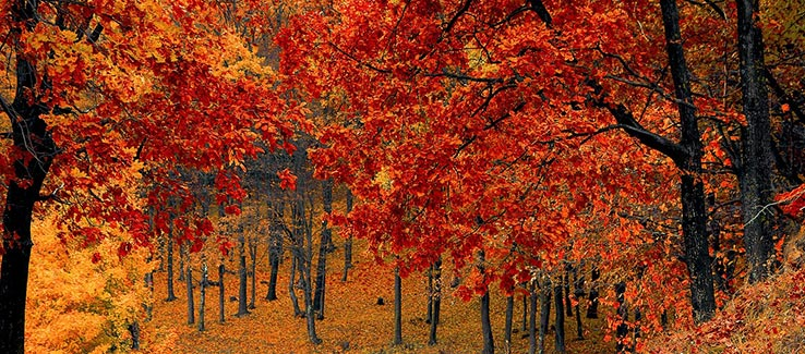 Deciduous trees with fall foliage