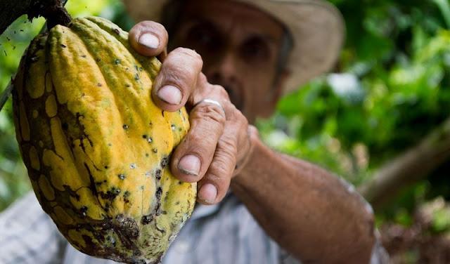 Cocoa Tourism