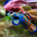 5 Ornamental Fish in the World