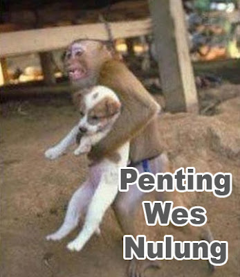 monyet dan anjing saling menolong