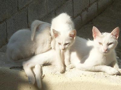 εικόνα μιας οικογένειας άσπρων γατών πάνω σε ένα τοίχο απο τσιμέντο