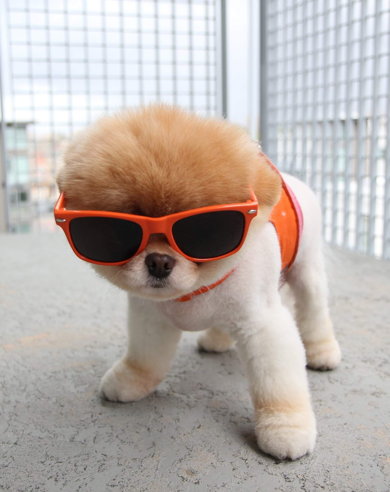 Cool Dogs HD Wallpapers