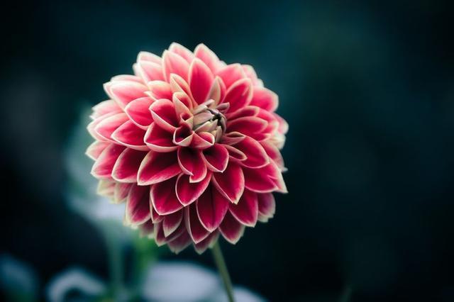 Las Fotos Mas Alucinantes: flores preciosas