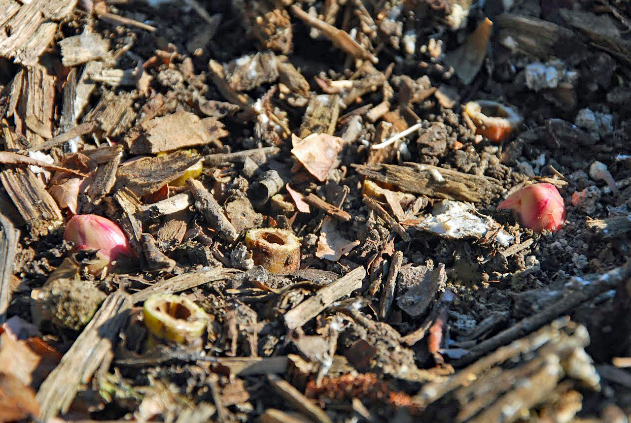 Southern peony 2016 questions growing peonies in south for South carolina soil