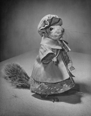 Vintage Everyday Funny Animal Photographs Of The Early Of