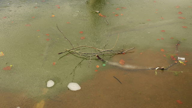 Twigs on ice of fountain pond, with reflection and submerged branch