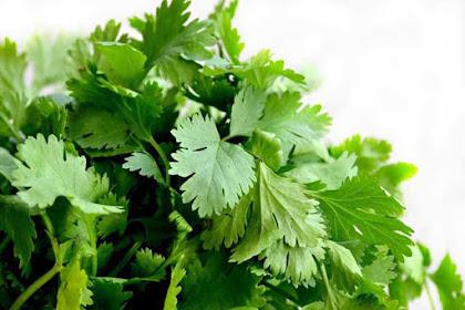6 Manfaat daun ketumbar bagi kesehatan