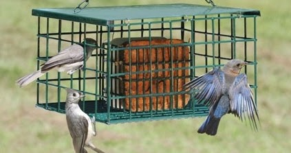 Wild Birds Unlimited How To Keep Grackles Away From Bird