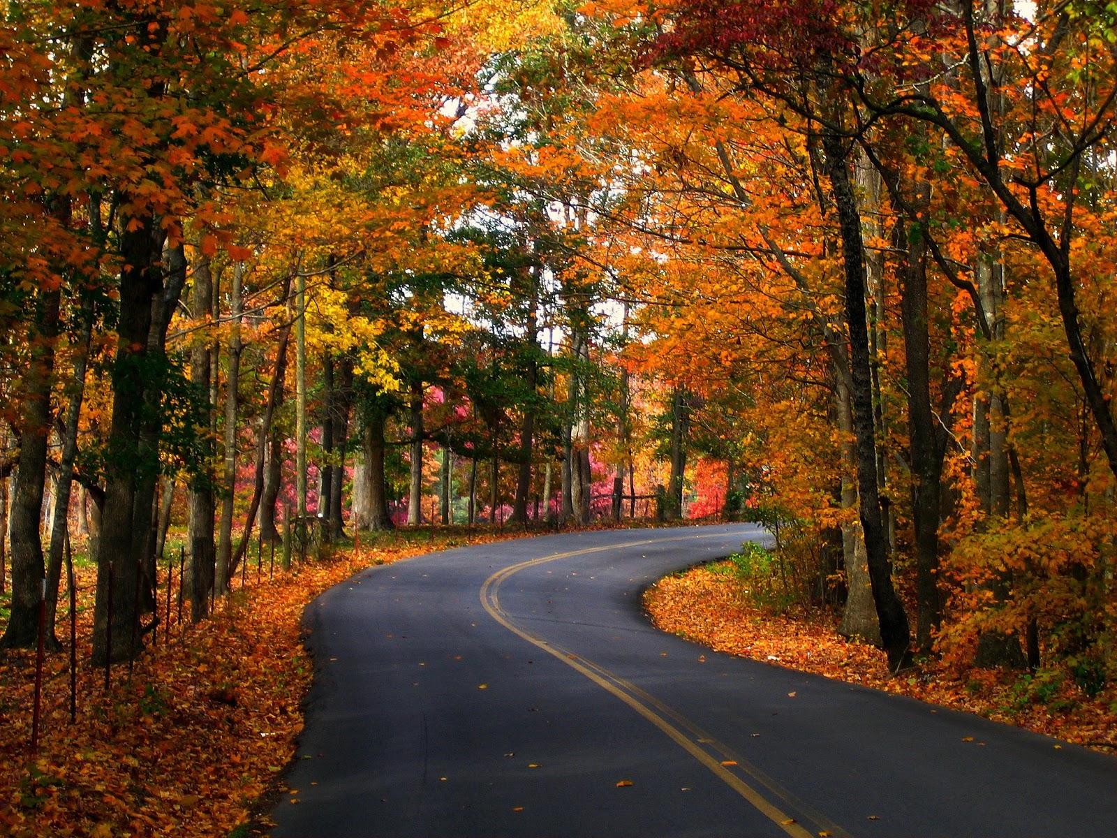 John Denver The Ultimate Collection: Angélica Italia: John Denver ♥ Take Me Home, Country Roads