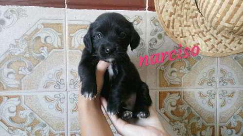 cachorros talla pequena 7