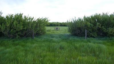 Schuler, Alberta, cemetery, backroads, abandoned, Buffalo Trail