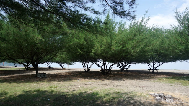 Pehpohonan di Sisi Tengah Pantai
