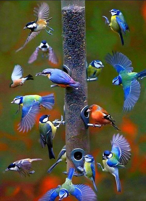 Fotos das Aves Mais Belas do Mundo