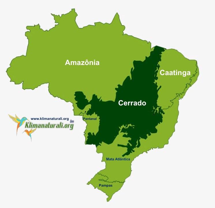 Domínio Morfoclimático dos Cerrados