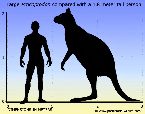 The Rock e Toretto vs 2 kangurus  Procoptodon-size