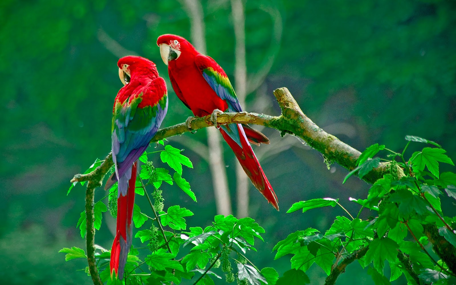 wow birds paradise wallpapers