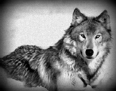 Werewolf 3d Wallpaper El Fil D Ariadna Ii Quot La Ll 224 Grima Quot Relat Guardonat Amb
