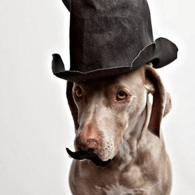 Funny dog moustache animal picture - Sherlock Holmes or Watson?