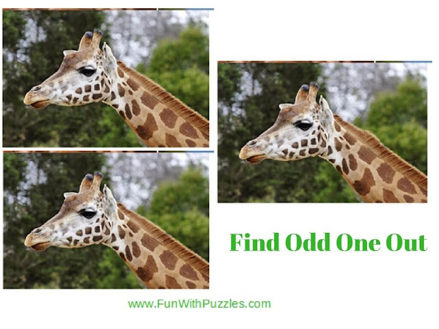 Spot The Difference Picture Brain Teaser Giraffe