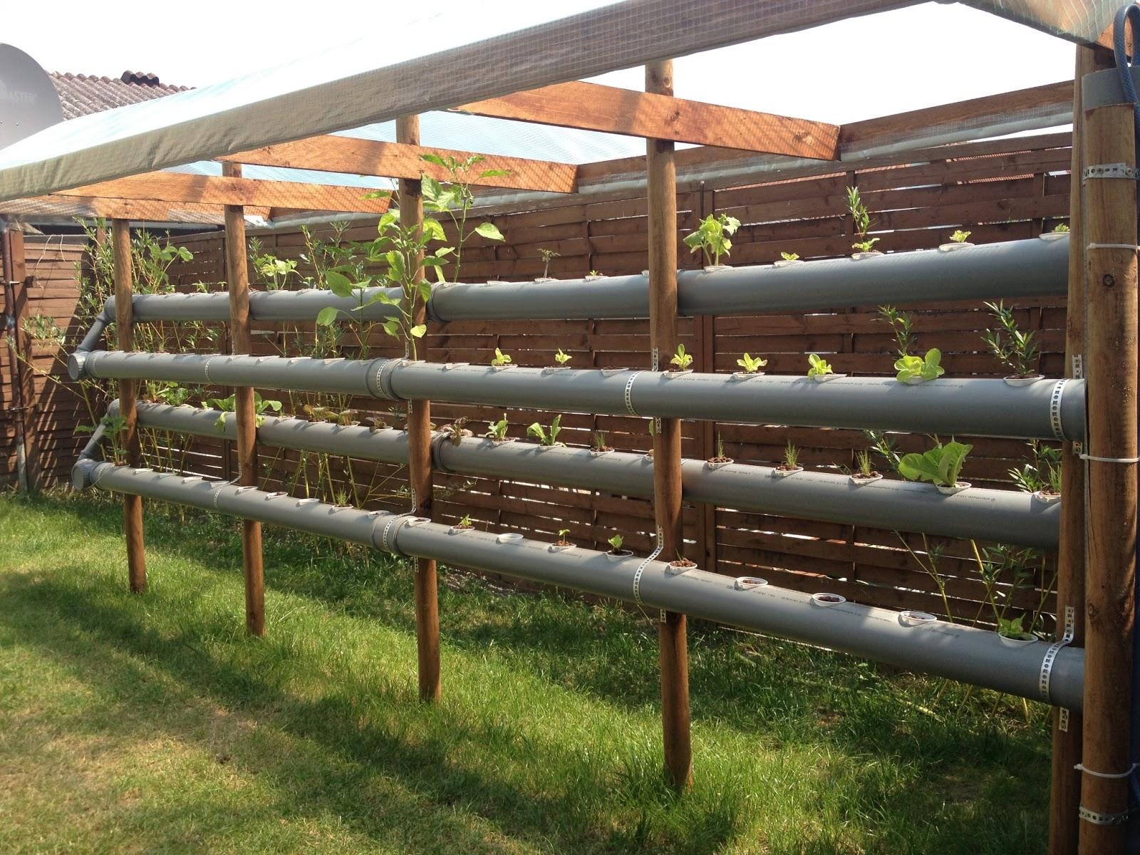 Hochbeet Erdbeeren Erdbeeren Pflanzen Balkon Hauptdesign
