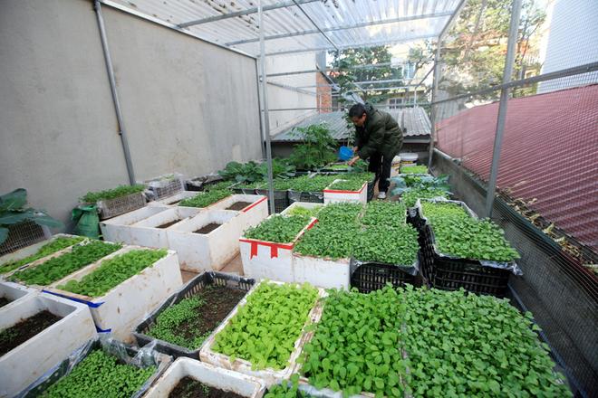Hướng dẫn cách trồng rau sạch đơn giản tự làm