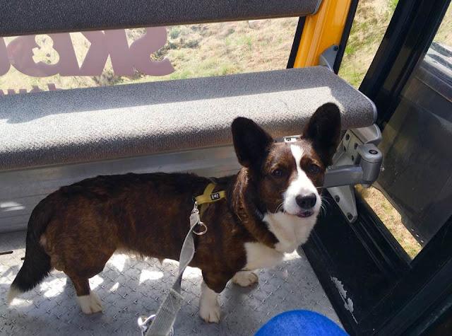 góry z psem, kolejka linowa z psem, podróże z psem