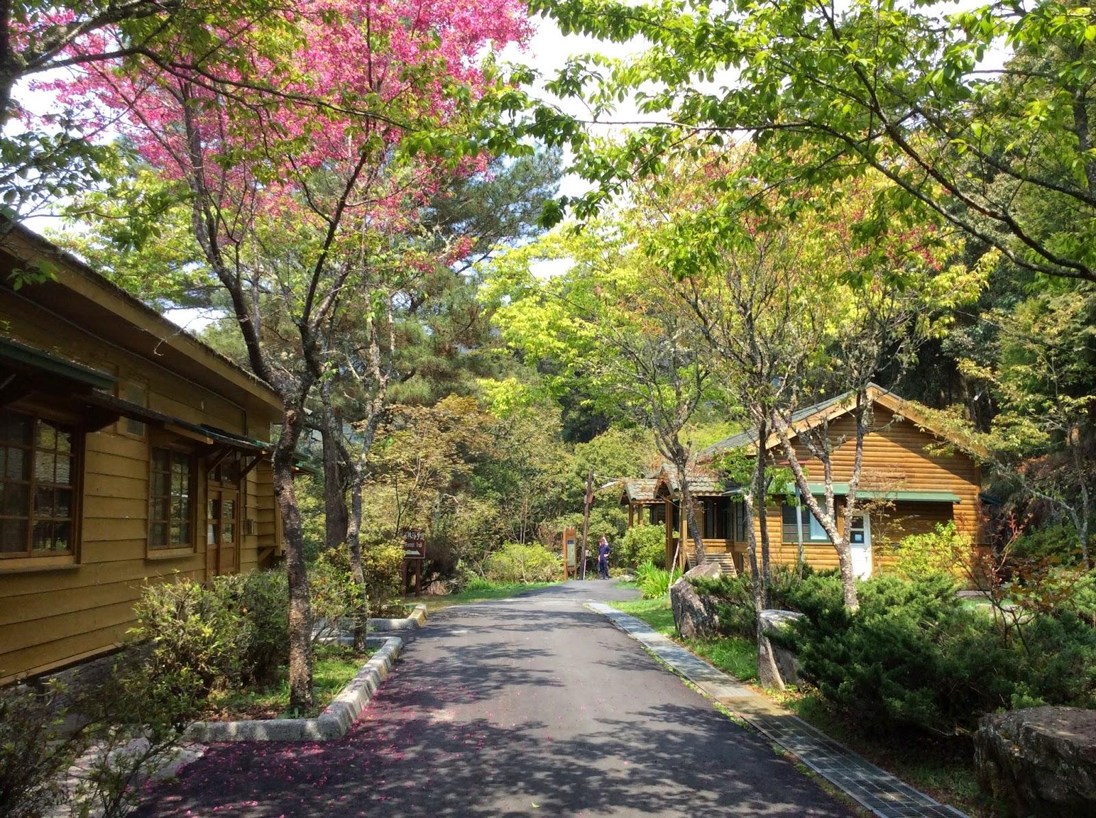 春暖花開: 2015 再訪〝大雪山國家森林遊樂區〞