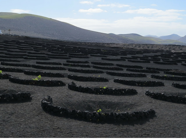 What to do in Lanzarote in January: Visit unique vineyards and sample local wines