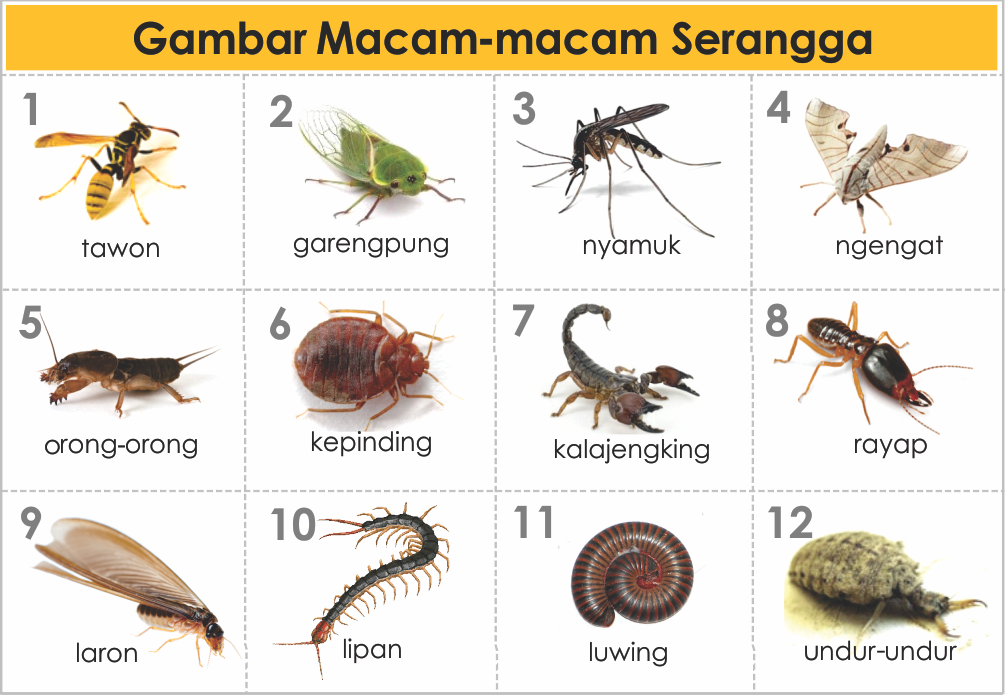 GAMBAR-JENIS & MACAM HEWAN SERANGGA | freewaremini