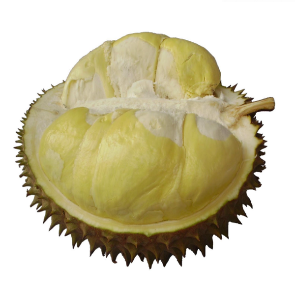 Durian Montong, Khasiat Durian Montong, Manfaat Durian Montong