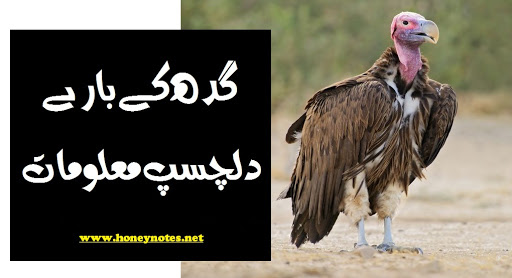 gidh bird wiki meaning of gidh in english gidh in eyes in english raja gidh in english raja gidh english translation birds name in urdu cheel bird in english birds name with pictures The King Buzzard: Bano Qudsia's Raja Gidh Translated from Urdu Gidh (Vultures) - Webjazba | Science & Technology, Islam, Urdu 60 Interesting Facts about Fish - Random Facts - Random History Fun Fish Facts for Kids - Interesting Information about Fish