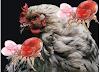 Tavuklarda Bit Sorunu ve Tavukları Bitlerden Koruma Yolları