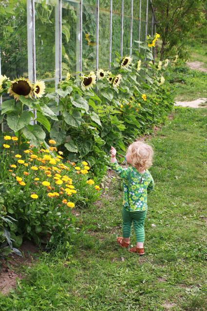vuxna leksaker sunflowers massage