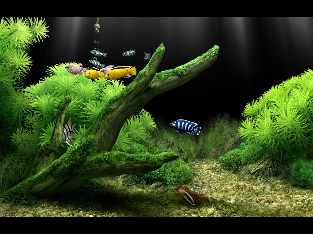Dream aquarium screensaver for mac computers