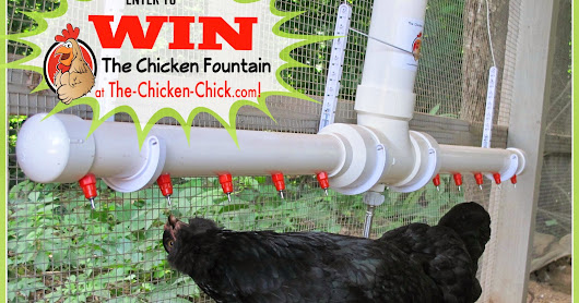 Chicken Fountain GIVEAWAY at The Clever Chicks Blog Hop #228