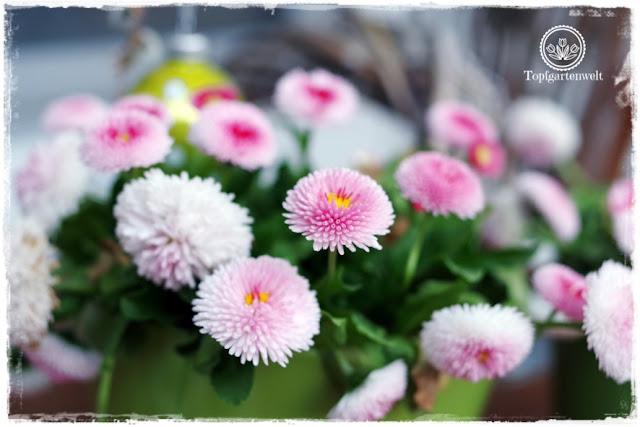 Gartenblog Topfgartenwelt natürliche moderne Osterdeko für den Garten: Frühlingsblumen für eine natürliche Osterdeko