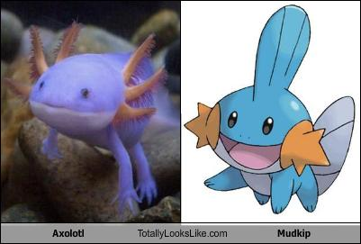 Mudkip Archives Awesci Science Everyday
