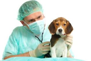 negocio de servicios para mascotas