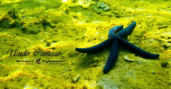 Canigao Island Underwater - Schadow1 Expeditions