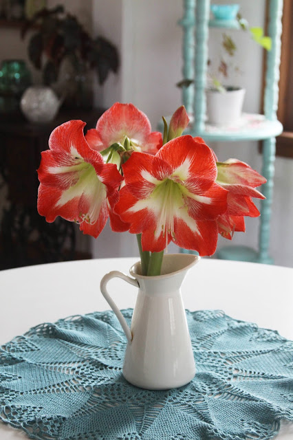 amaryllis, striped amaryllis, flowers, Anne Butera, My Giant Strawberry