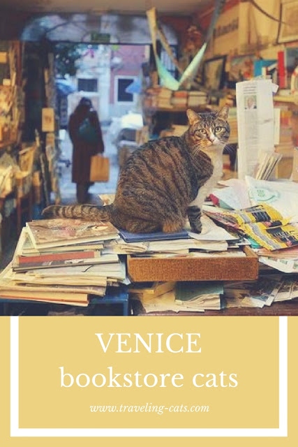 venice bookstore cats