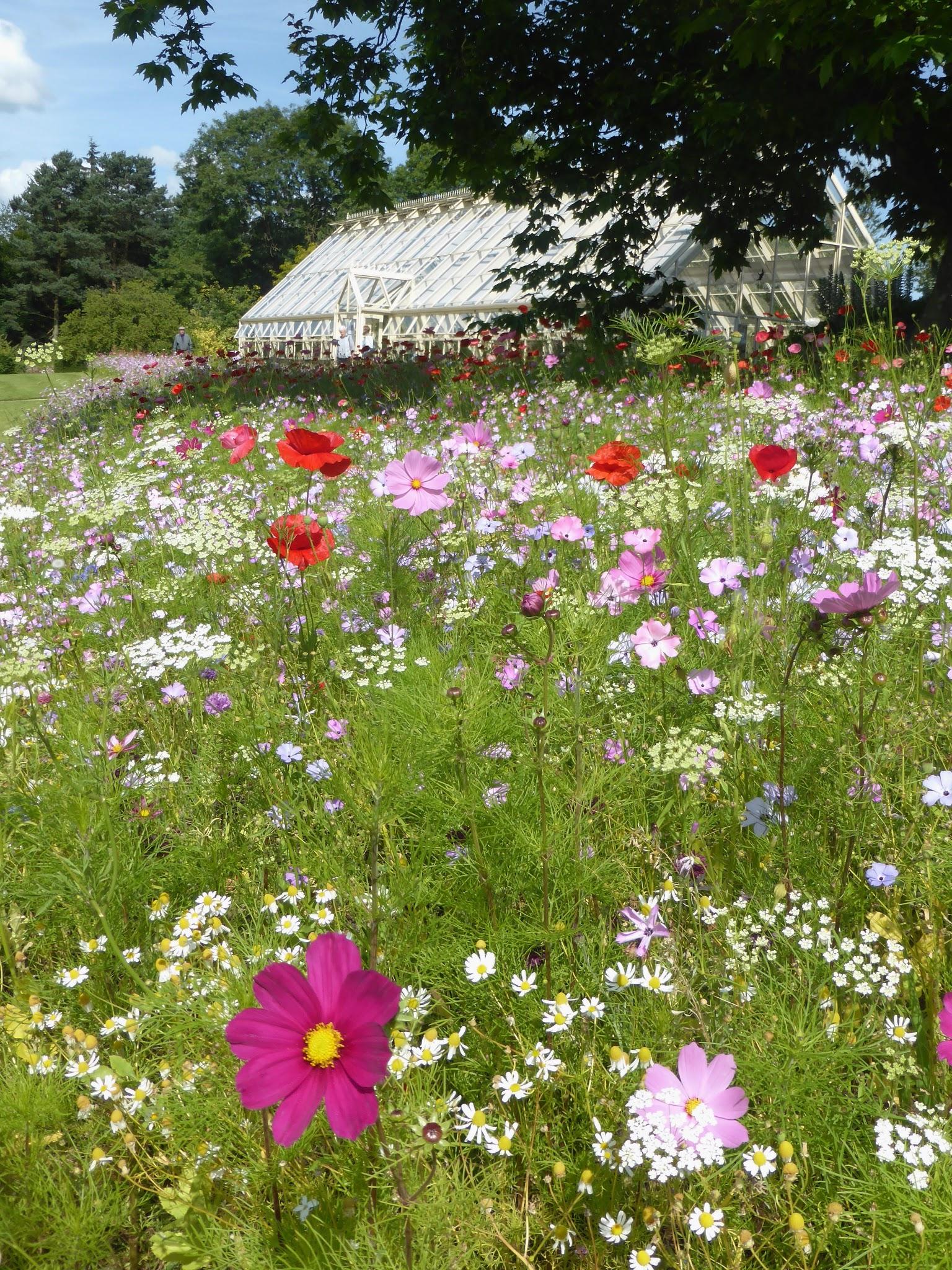 Wildflowers at RHS Harlow Carr, Harrogate
