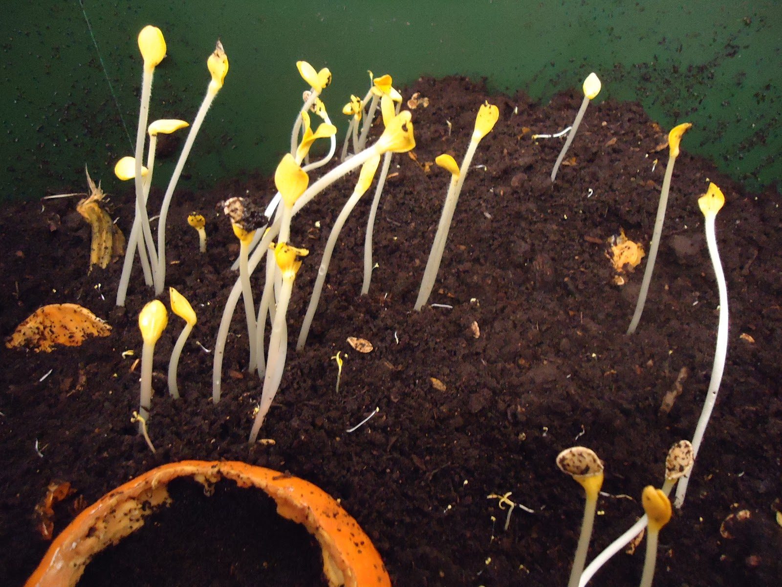 worm wigwam sprouting seeds