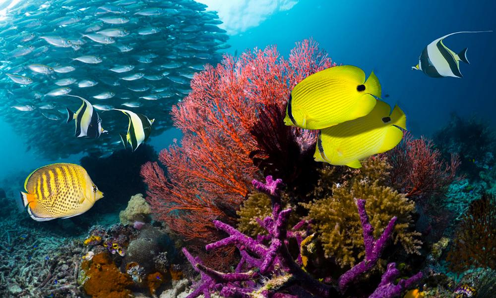 Biodiversidade Evolutiva do Ambiente Marinho e Terrestre