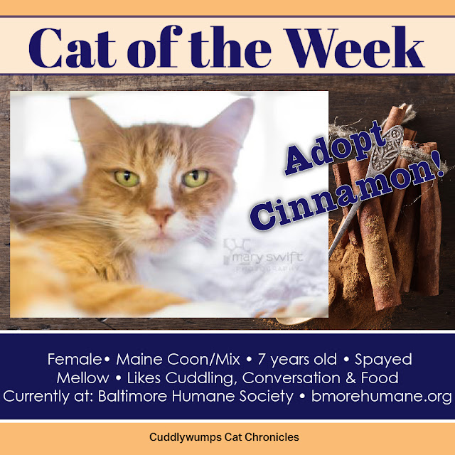 Adopt Cinnamon! 7-yr-old female Maine Coon/Mix, Baltimore