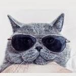 Ce que vous ne saviez pas sur les chats !