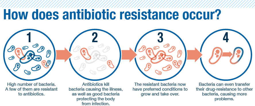 antibiotics and drug resistant bacteria Antibiotic medications are used to kill bacteria, which can cause illness and disease they have made a major contribution to human health many diseases that once killed people can now be.