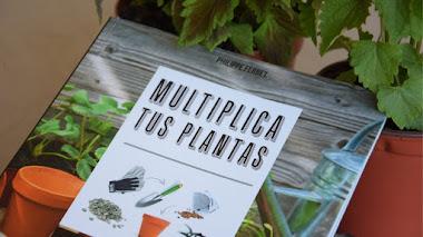 Multiplica tus plantas con esquejes, acodos, división o siembra